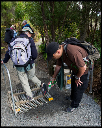 Before entering the Waipoua Forest on our guided tour, we were asked to brush and rinse the soles of our shoes.  This protects the Kauris from pathogens brought in on the shoes of tourists. Here you see Koro, our Maori guide, assisting.<br /> <br /> Waipoua Forest<br /> Hokianga, NZ<br /> November 20, 2011<br /> 110
