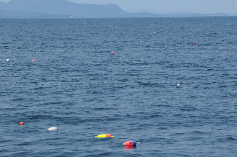 There are 2.9 million lobster buoys off the coast of Maine!