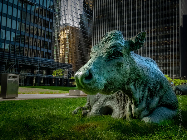 Moo.. ving to the City!