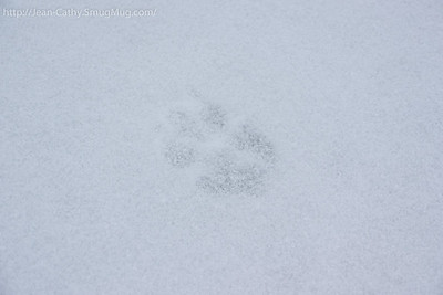 The Apex predator of Algonquin Park leave his mark.