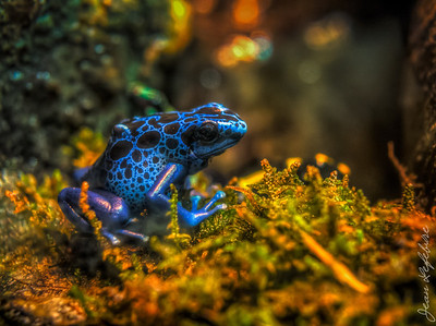 Blue Frog - Museum of Nature Ottawa