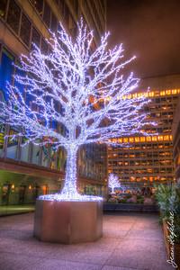 Christmas Lights in Toronto!