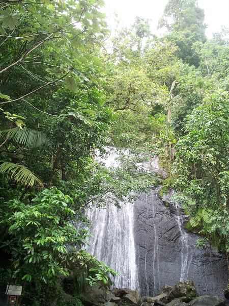 Falls in El Yunque Rainforest