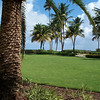 Back lawn of the Wyndam Rio Mar... view to ocean