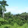 Within El Yunque Rainforest