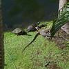 Hey!  Turtles too!