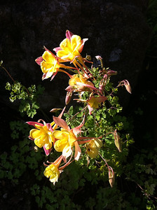 Flowers near the river walk Boise, ID