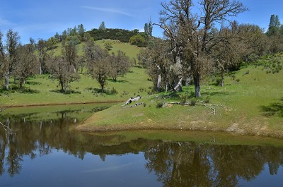 One of the several ponds on the ranch.