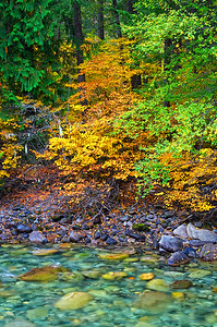 A small creek along the west wide of the North Cascades Highway.