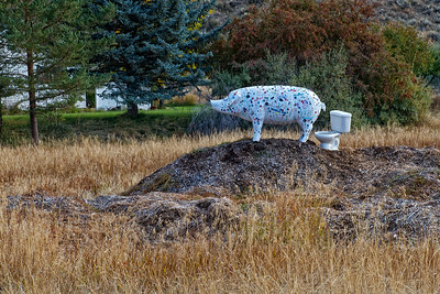 Saw this pig in a field in the Methow Valley - couldn't resist a shot.