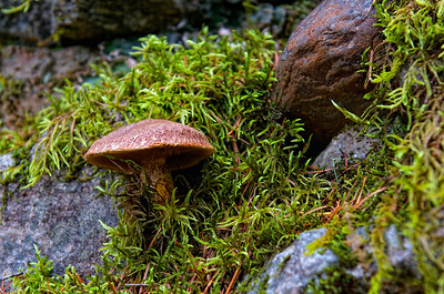 Mushrooms growing along the trail at Gorge Dam visitor area.