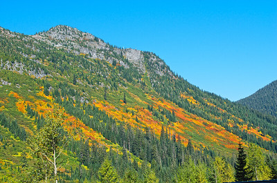 Fall color in the avalanche shoots near the summit at Steven's Pass