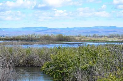 The marshlands at the National Wildlife Refuge near Toppenish, WA