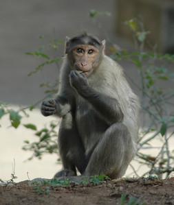 Monkeys on the street