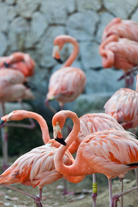 Flamingos at Xcaret Eco-Park in Mexico.