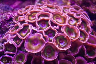 Live coral in the aquarium at Xcaret Eco-Park in Mexico.