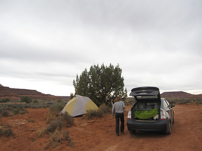 Our tent hiding from the wind behind this tree Canyonlands National Park