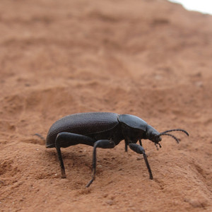 A visitor to our camp Canyonlands National Park