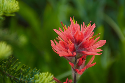 This paintbrush was a kind of salmon color.