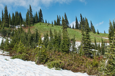 An open meadow slop just above the Paradise parking lot.  Still lots of snow up here for August!