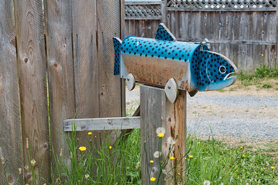 Fun mailbox spotted on the way to Mt Rainier