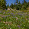 Dropping down into the sheltered valleys leads to sparse trees and meadows with lots of wildflowers.