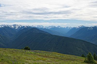 Hurricane Ridge and the Olympic Mountains