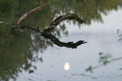 The moon reflecting in the pond.
