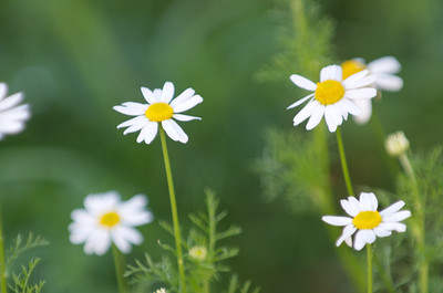 Daisy type wildflowers.