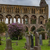 View of the structure of the Nave of Jedburgh Abbey through flowering shrubs.