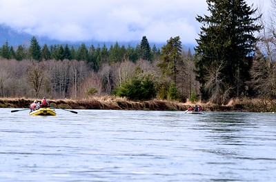 Rafts on the Skagit