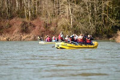 Rafts on the Skagit