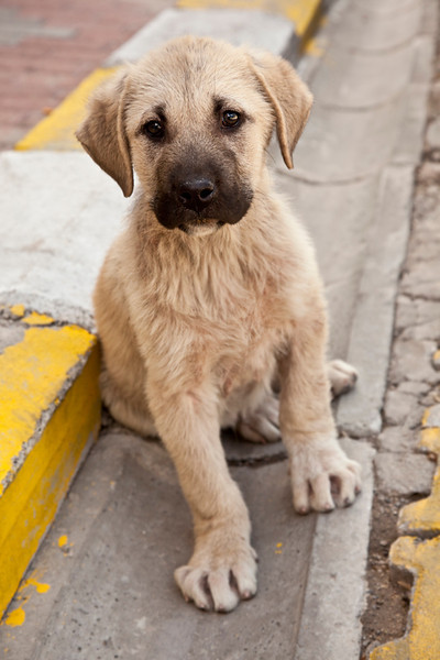 Uchisar.<br /> <br /> I wish I could've provided home for every stray dog that I encountered on my travel :(