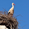 Stork nesting on aqueduct ruins, Selcuk<br /> <br /> The storks make their nest in Selcuk from early May until September. Looking up from the ground you can see little storkies moving about in the nest; So cute!  I wish I had been able to book a hotel room that looks directly over one of the nests.