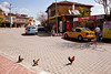 """Why did the chicken crossed the road?"", Uchisar"