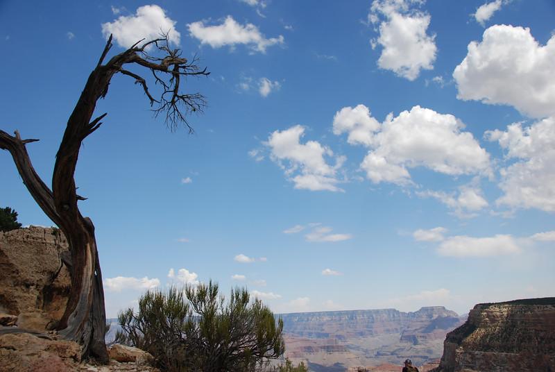 Grand Canyon Day 1DSC_1783-22.jpg