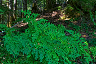 A walk in the wood reveals some beautiful ferns.