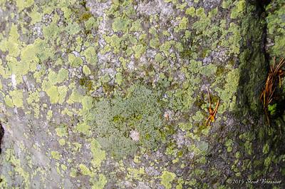 Lichen Hunting