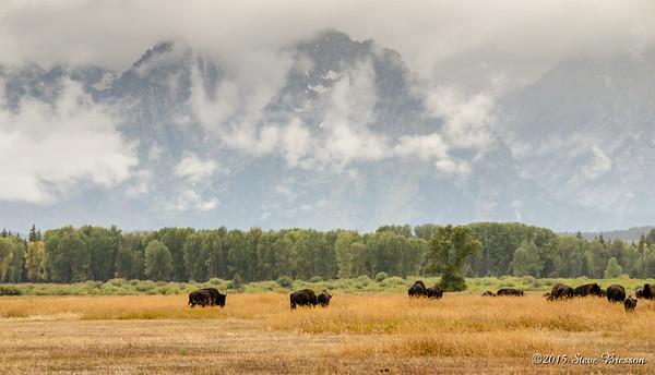2011/09/16 PM Grand Tetons