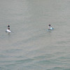 Fort Lauderdale - Paddle surfers
