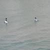 Fort Lauderdale - Paddle surfers