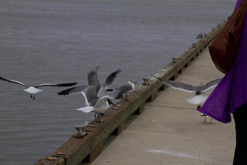 2012-02-17-Amelia-Island