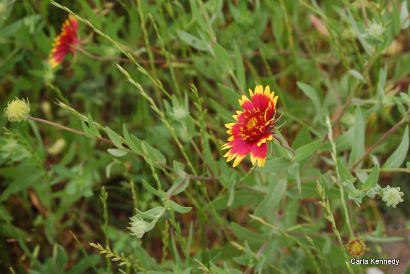 Wildflowers along 290