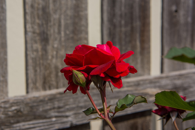 2012-04-30-Flowers