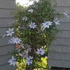 Plant in Leach's garden