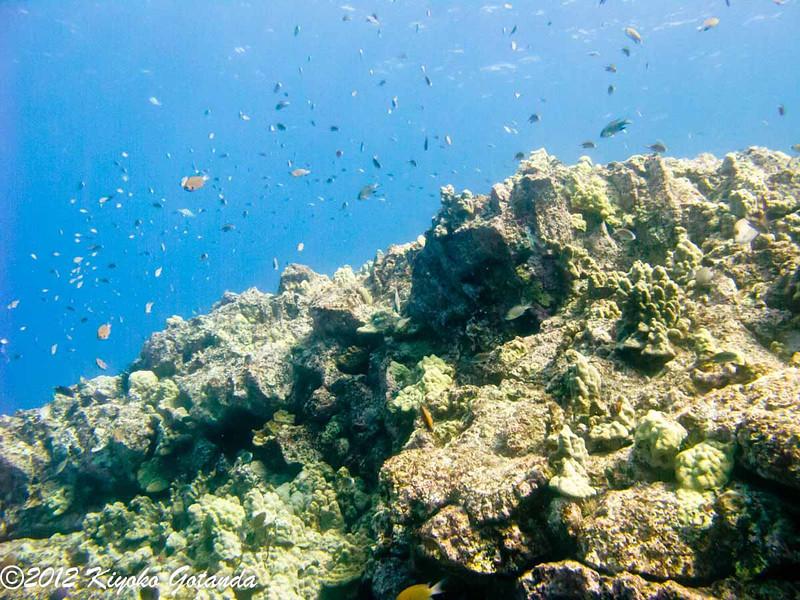 Diving in Kona