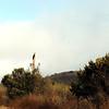 2012-09-23 Cayucos Beach hawk 1
