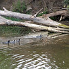 2012-09-24 Pismo Creek birds 1