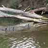 2012-09-24 Pismo Creek birds 1