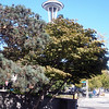 Seattle Space Needle from bus stop